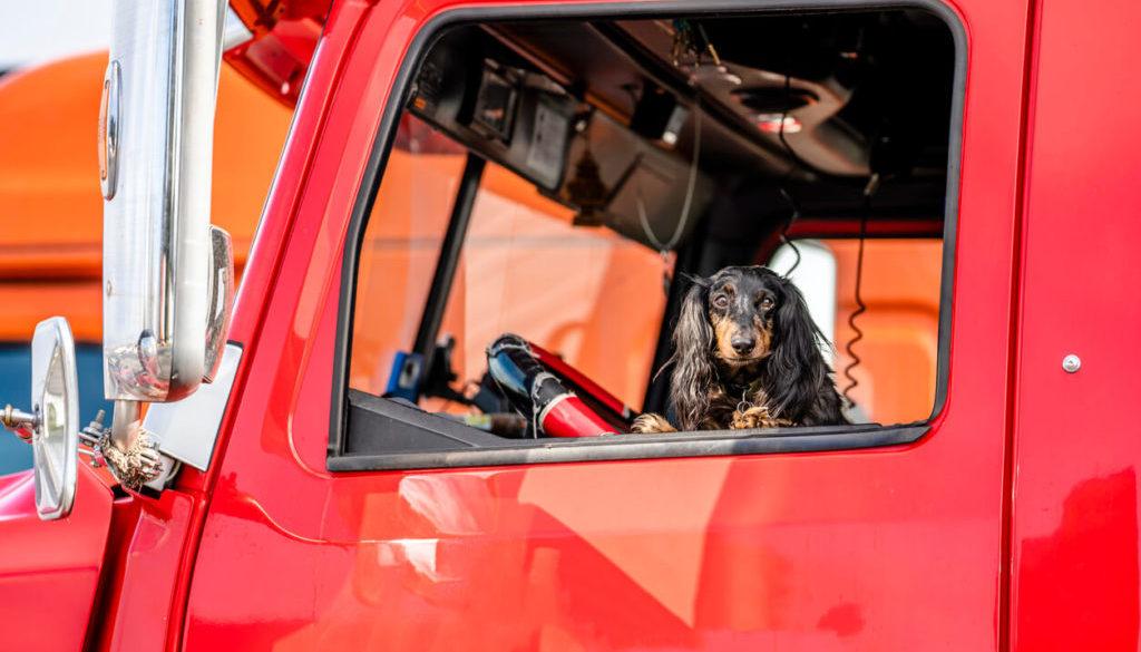 Trucker Pet Ownership