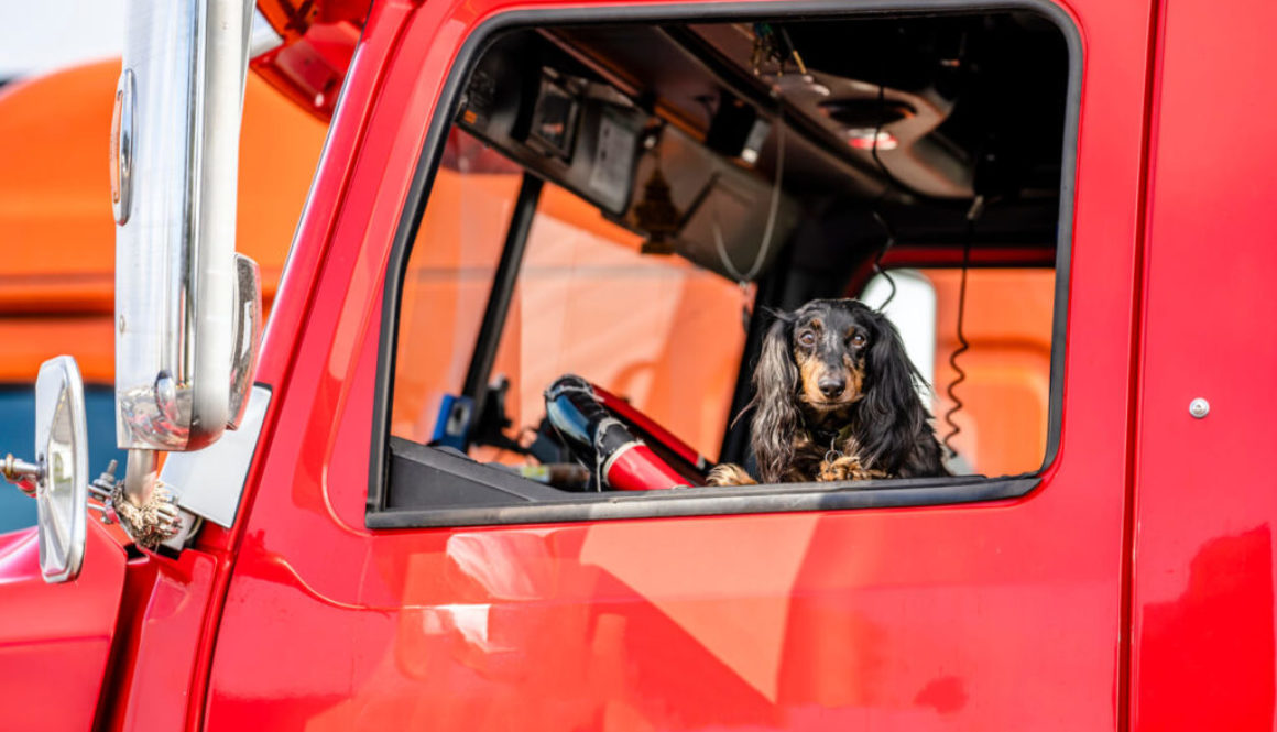 Trucker Pet Ownership